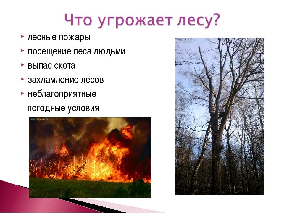 лесные пожары посещение леса людьми выпас скота захламление лесов неблагоприя...