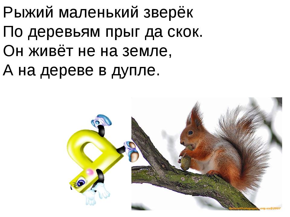 Рыжий маленький зверёк По деревьям прыг да скок. Он живёт не на земле, А на д...