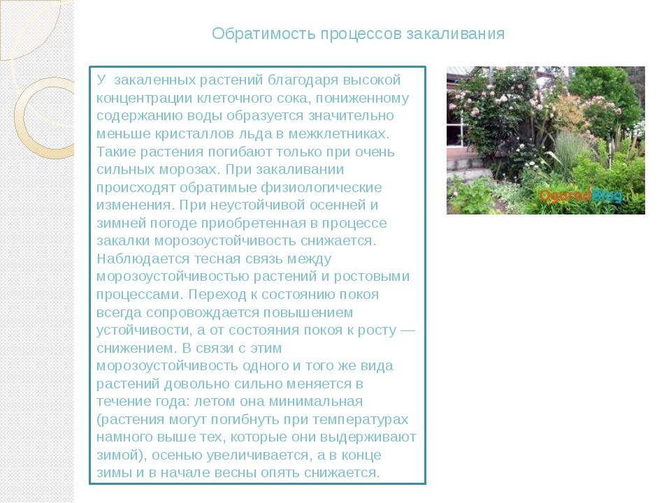 Обратимость процессов закаливания У закаленных растений благодаря высокой кон...