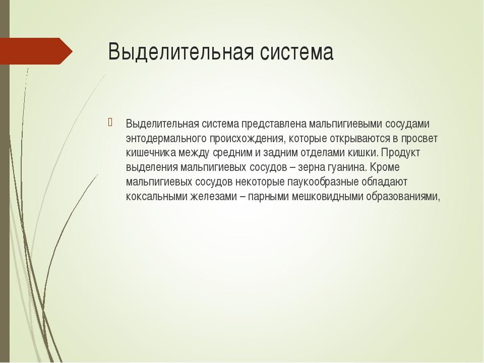 Выделительная система Выделительная система представлена мальпигиевыми сосуда...