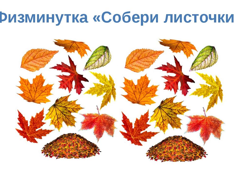 Физминутка «Собери листочки»