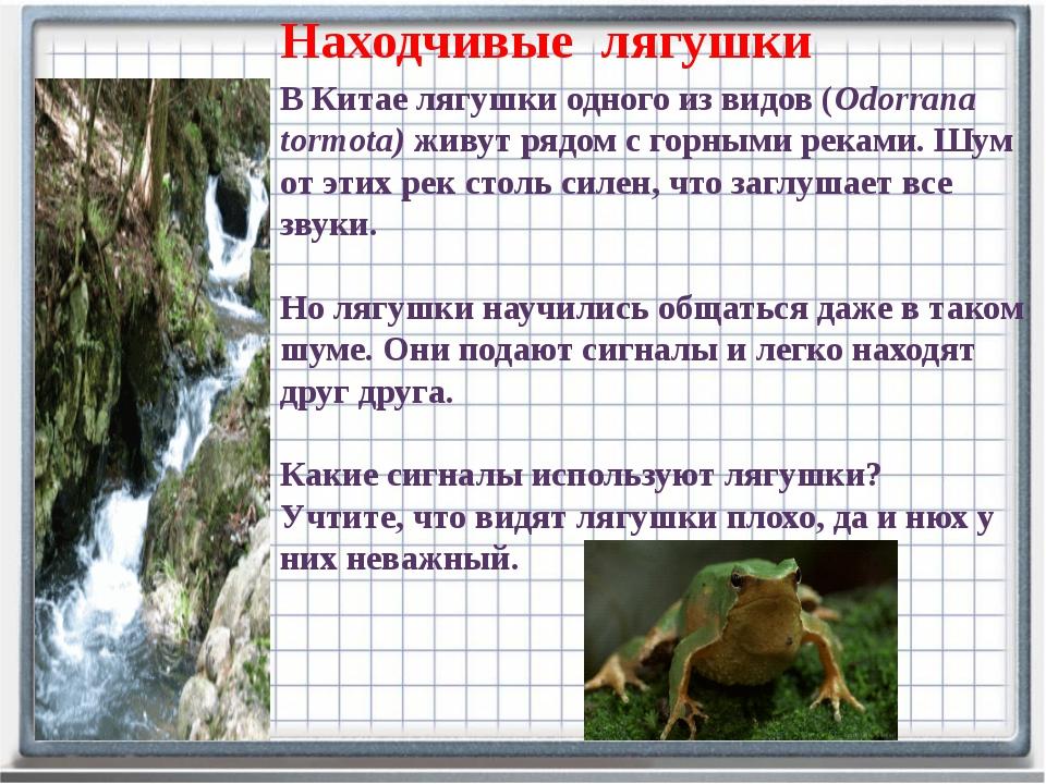 В Китае лягушки одного из видов (Odorrana tormota) живут рядом с горными река...