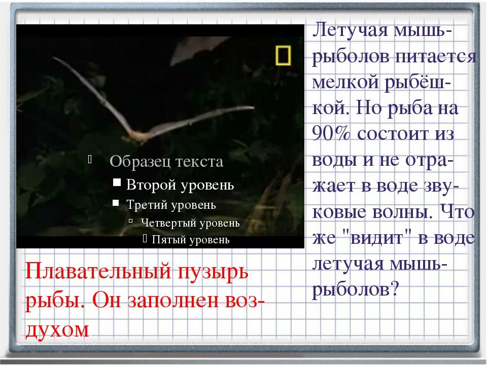 Журнал «Физика – Первое сентября» № 3/2012 Летучая мышь-рыболов питается мелк...
