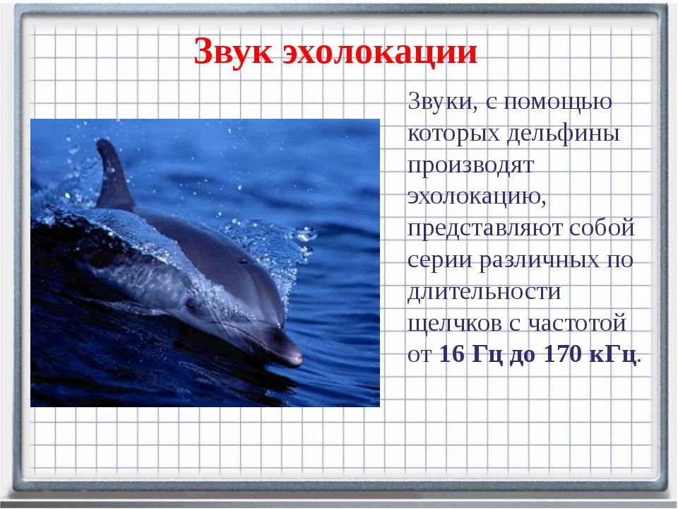Звук эхолокации Звуки, с помощью которых дельфины производят эхолокацию, пред...