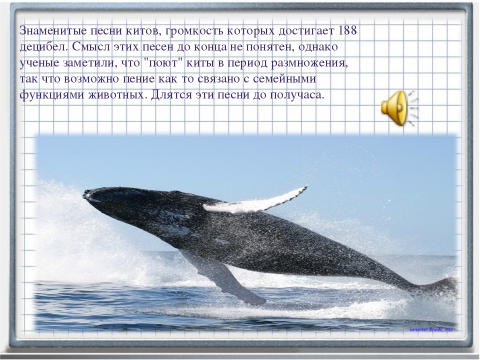 Знаменитые песни китов, громкость которых достигает 188 децибел. Смысл этих п...