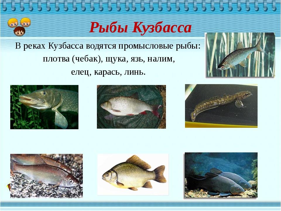 Рыбы Кузбасса В реках Кузбасса водятся промысловые рыбы: плотва (чебак), щука...