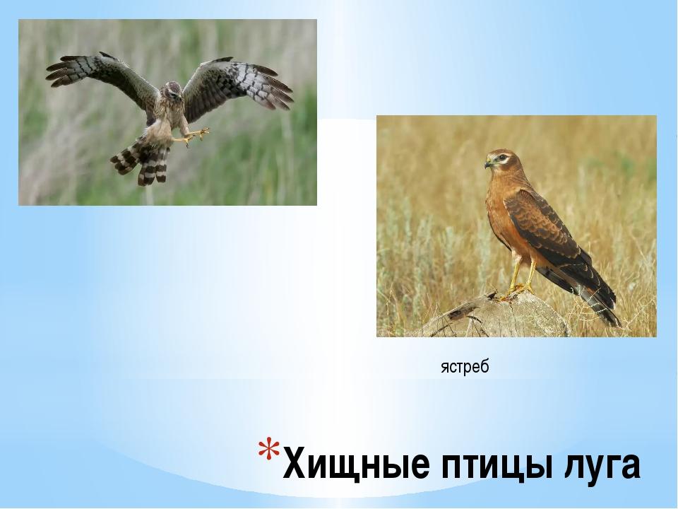 Хищные птицы луга...