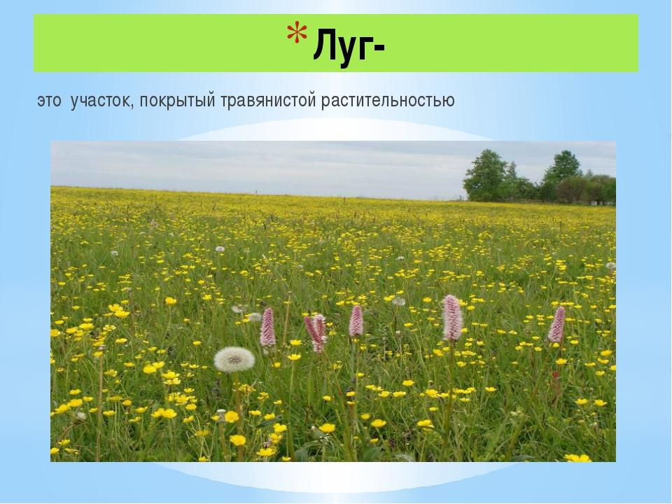 Луг- это участок, покрытый травянистой растительностью