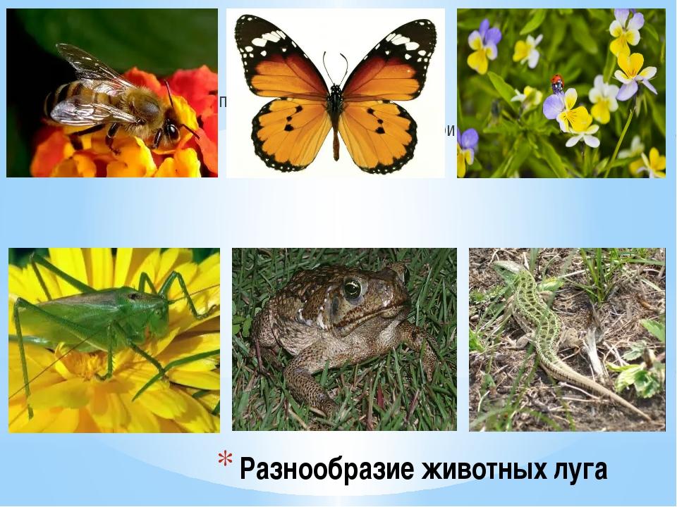 Разнообразие животных луга...