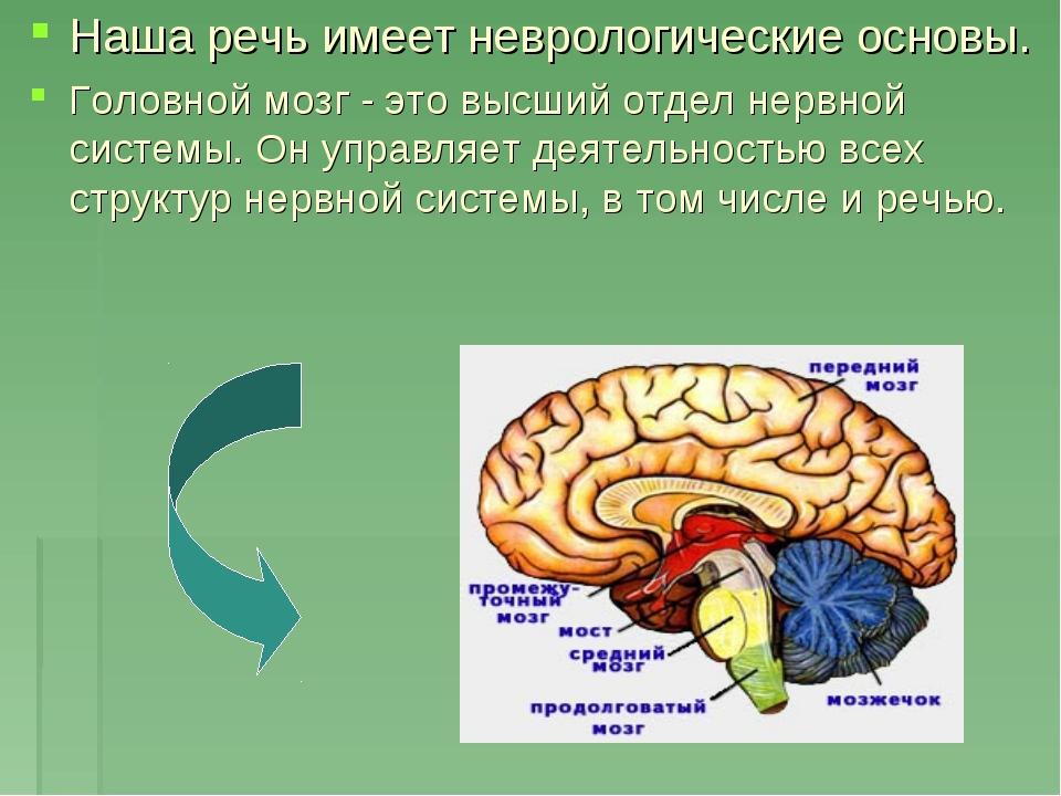 Наша речь имеет неврологические основы. Головной мозг - это высший отдел нерв...