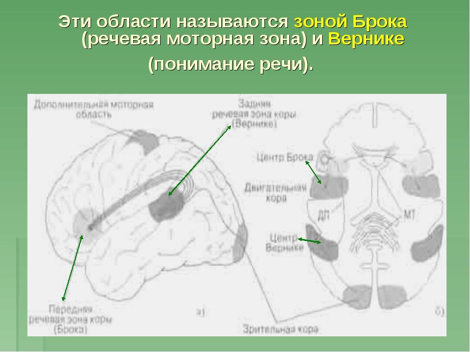 Эти области называются зоной Брока (речевая моторная зона) и Вернике (пониман...