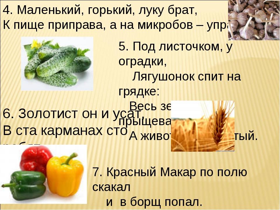 4. Маленький, горький, луку брат, К пище приправа, а на микробов – управа. 5....