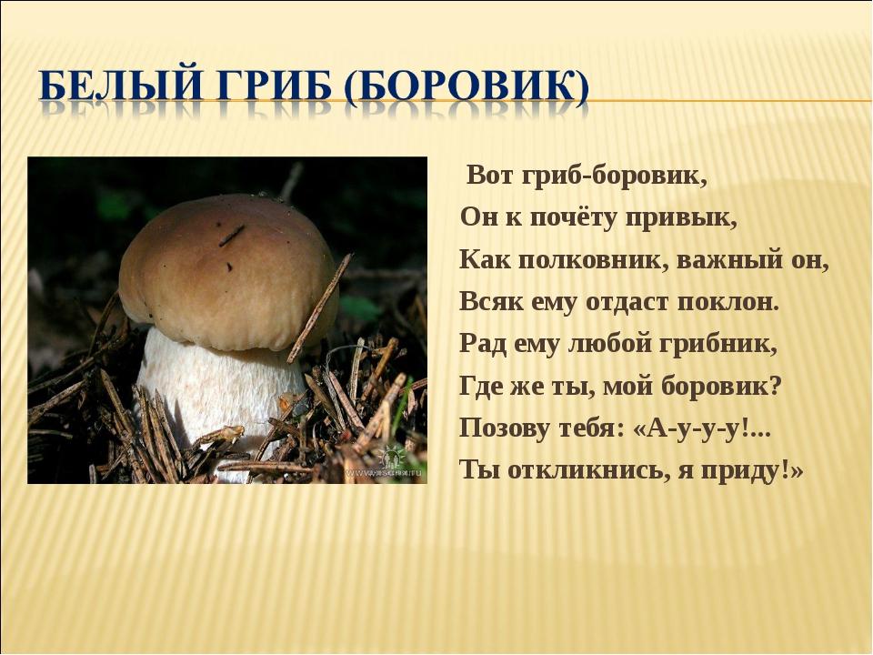 Вот гриб-боровик, Он к почёту привык, Как полковник, важный он, Всяк ему отд...