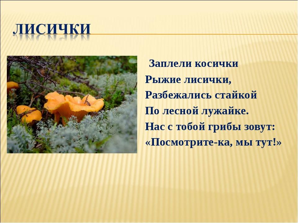 Заплели косички Рыжие лисички, Разбежались стайкой По лесной лужайке. Нас с...