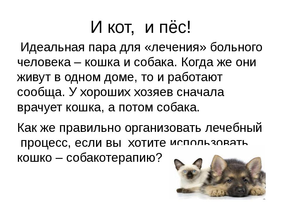 И кот, и пёс! Идеальная пара для «лечения» больного человека – кошка и собака...