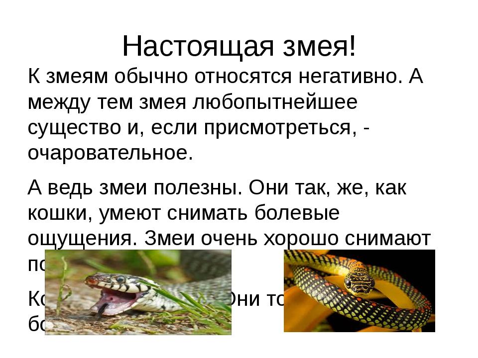Настоящая змея! К змеям обычно относятся негативно. А между тем змея любопытн...