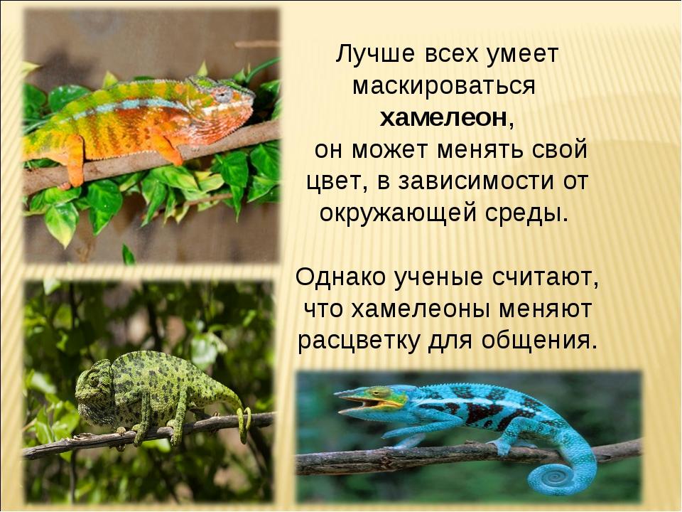 Лучше всех умеет маскироваться хамелеон, он может менять свой цвет, в зависим...