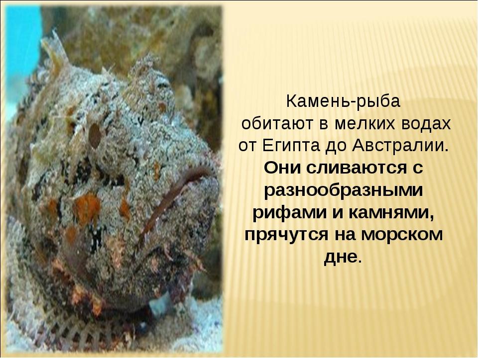 Камень-рыба обитают в мелких водах от Египта до Австралии. Онисливаются с ра...