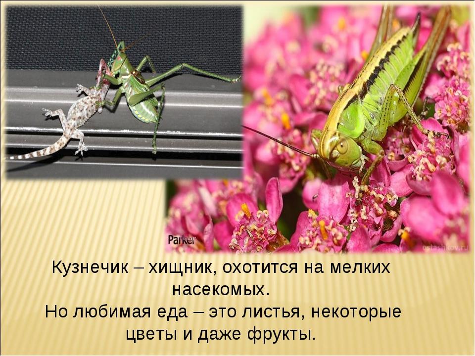 Кузнечик – хищник, охотится на мелких насекомых. Но любимая еда – это листья,...