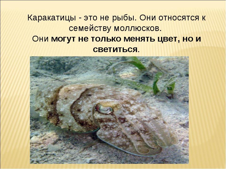 Каракатицы - это не рыбы. Они относятся к семейству моллюсков. Онимогут не т...