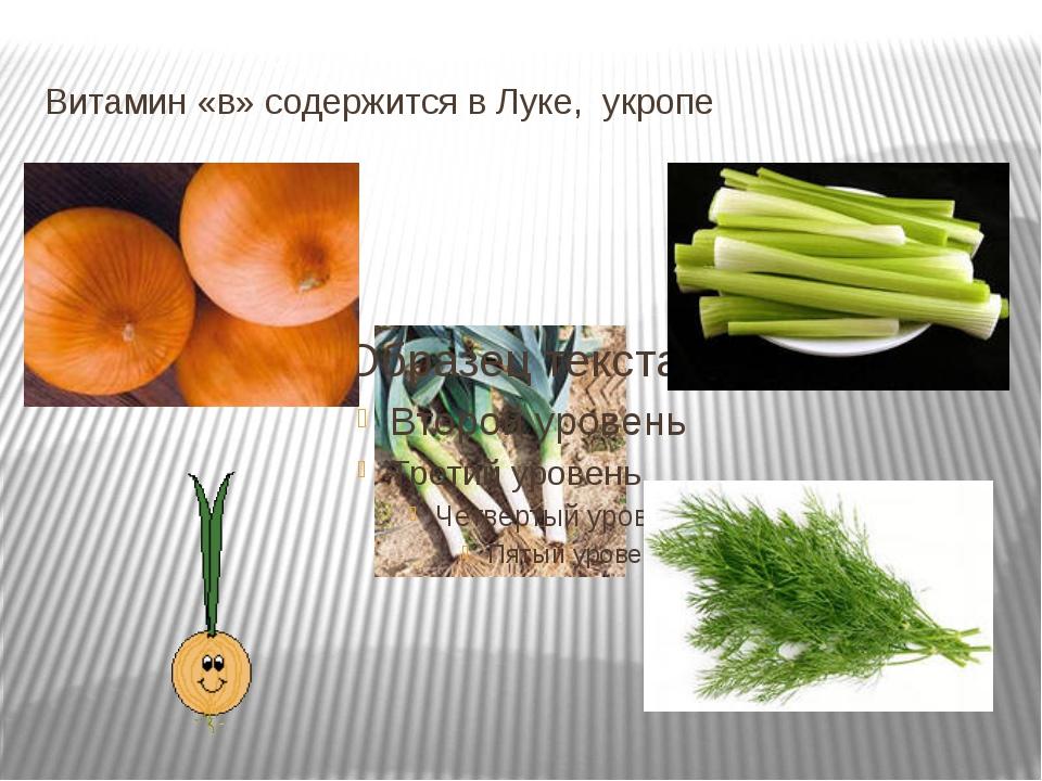 Витамин «в» содержится в Луке, укропе