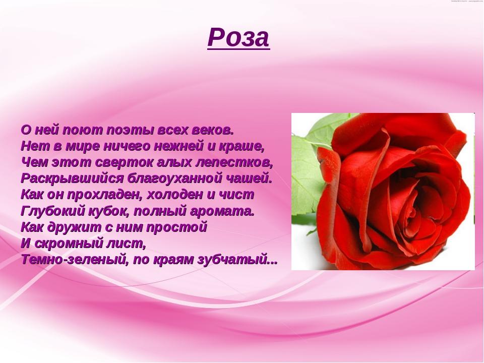 Роза О ней поют поэты всех веков. Нет в мире ничего нежней и краше, Чем этот...