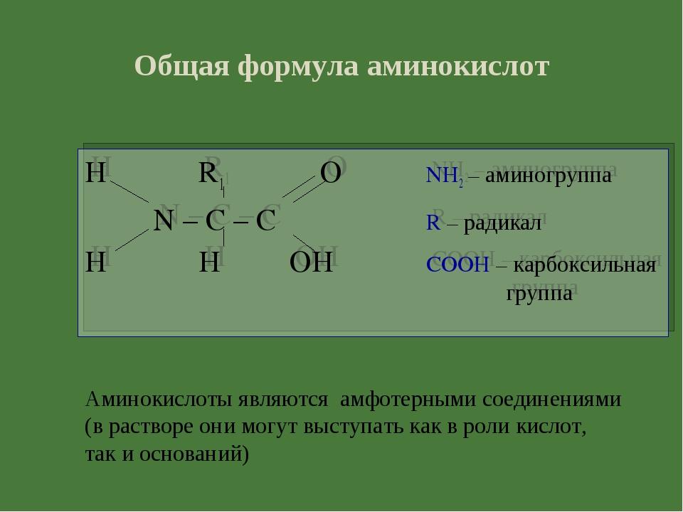 Общая формула аминокислот H R1 ONH2 – аминогруппа N – C – CR – ради...