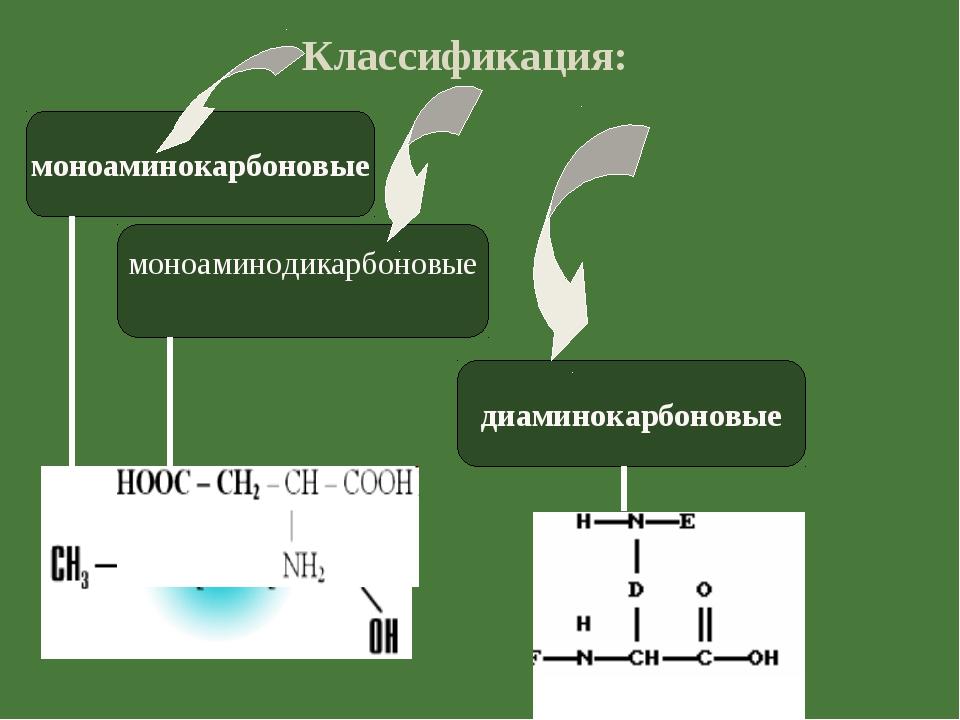 Классификация: моноаминокарбоновые моноаминодикарбоновые диаминокарбоновые
