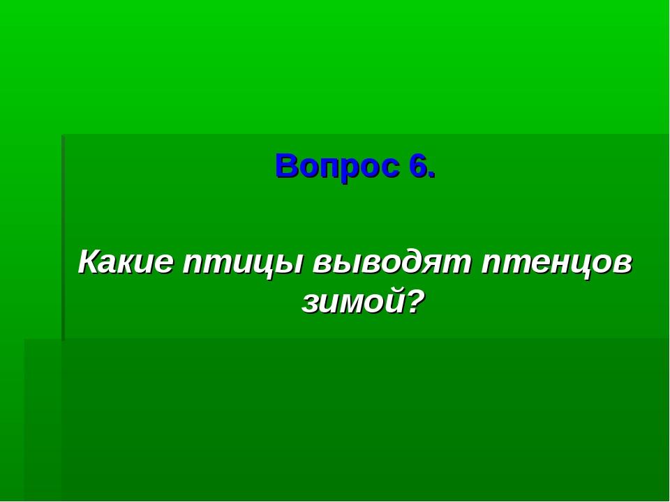 Вопрос 6. Какие птицы выводят птенцов зимой?