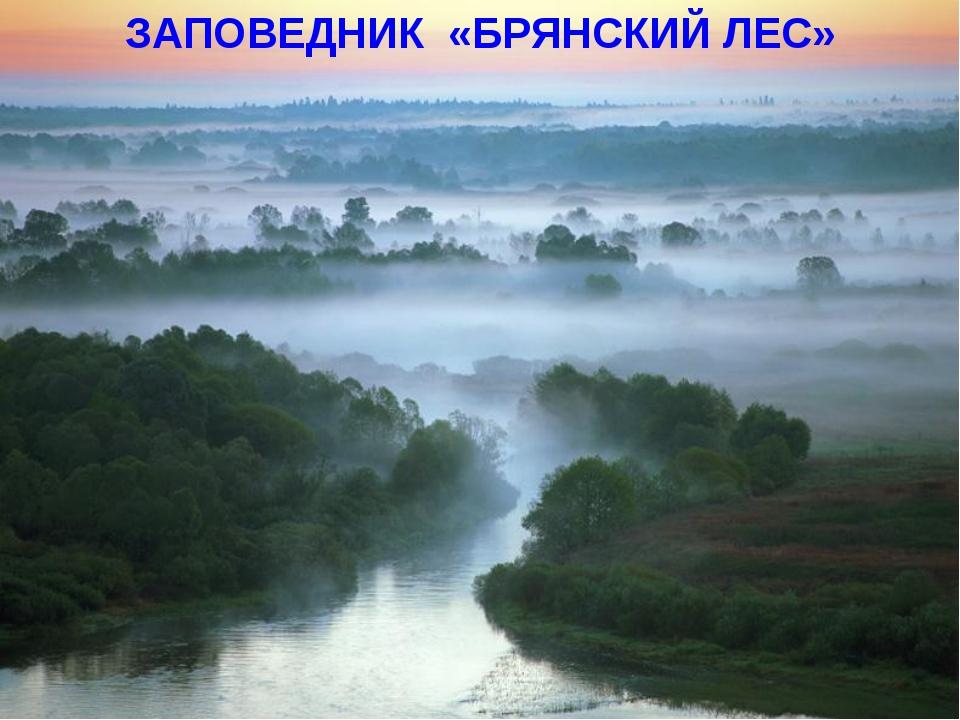 ЗАПОВЕДНИК «БРЯНСКИЙ ЛЕС»