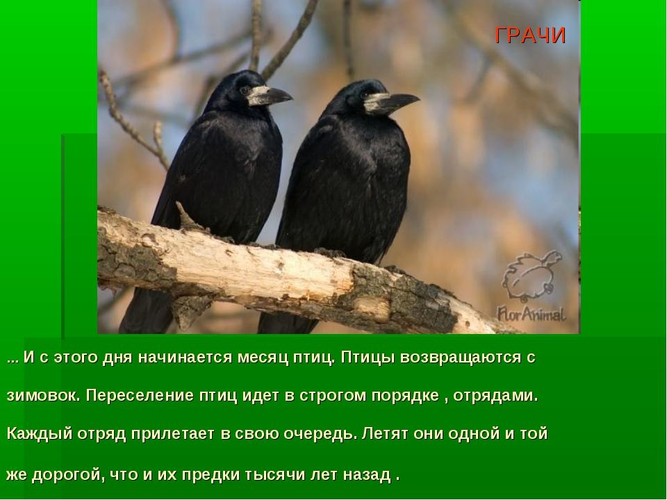 … И с этого дня начинается месяц птиц. Птицы возвращаются с зимовок. Переселе...