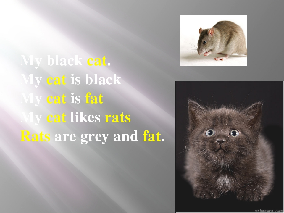 My black cat. My cat is black My cat is fat My cat likes rats Rats are gr...