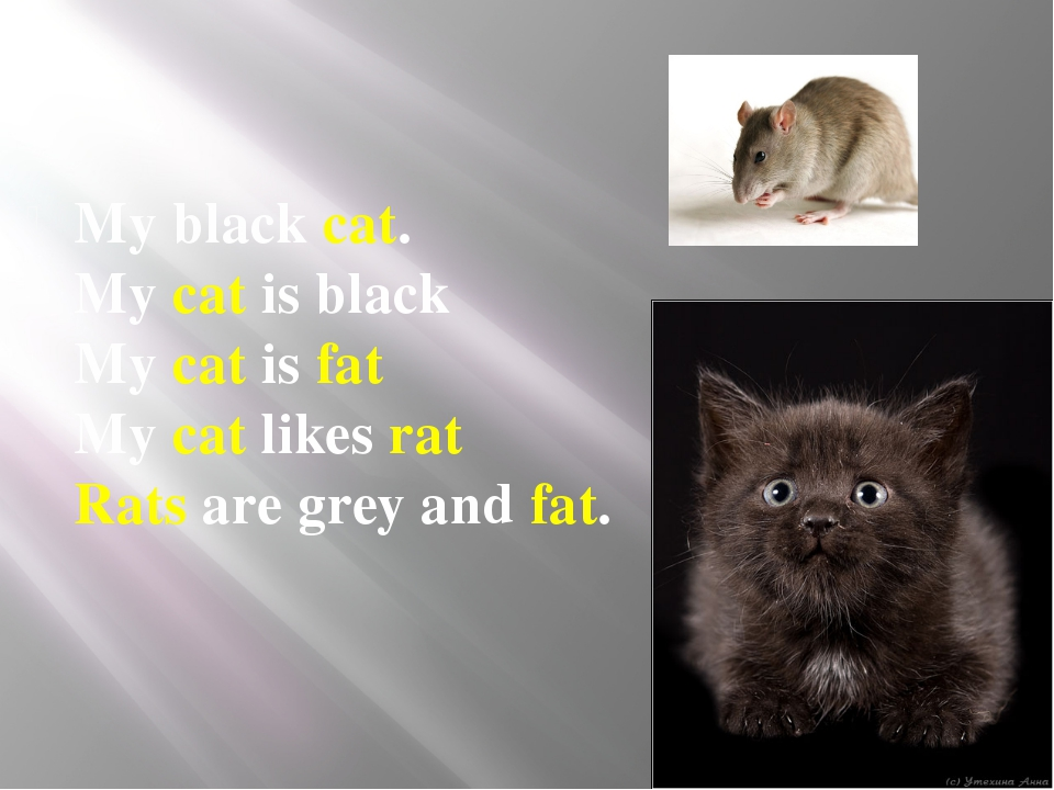My black cat. My cat is black My cat is fat My cat likes rat Rats are gre...