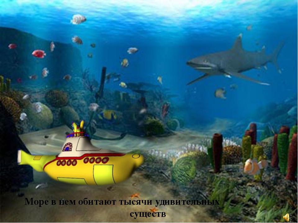 Море в нем обитают тысячи удивительных существ