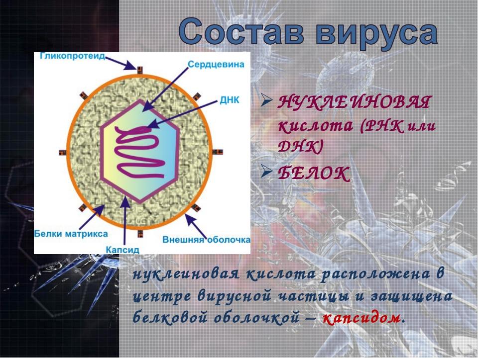 НУКЛЕИНОВАЯ кислота (РНК или ДНК) БЕЛОК нуклеиновая кислота расположена в цен...