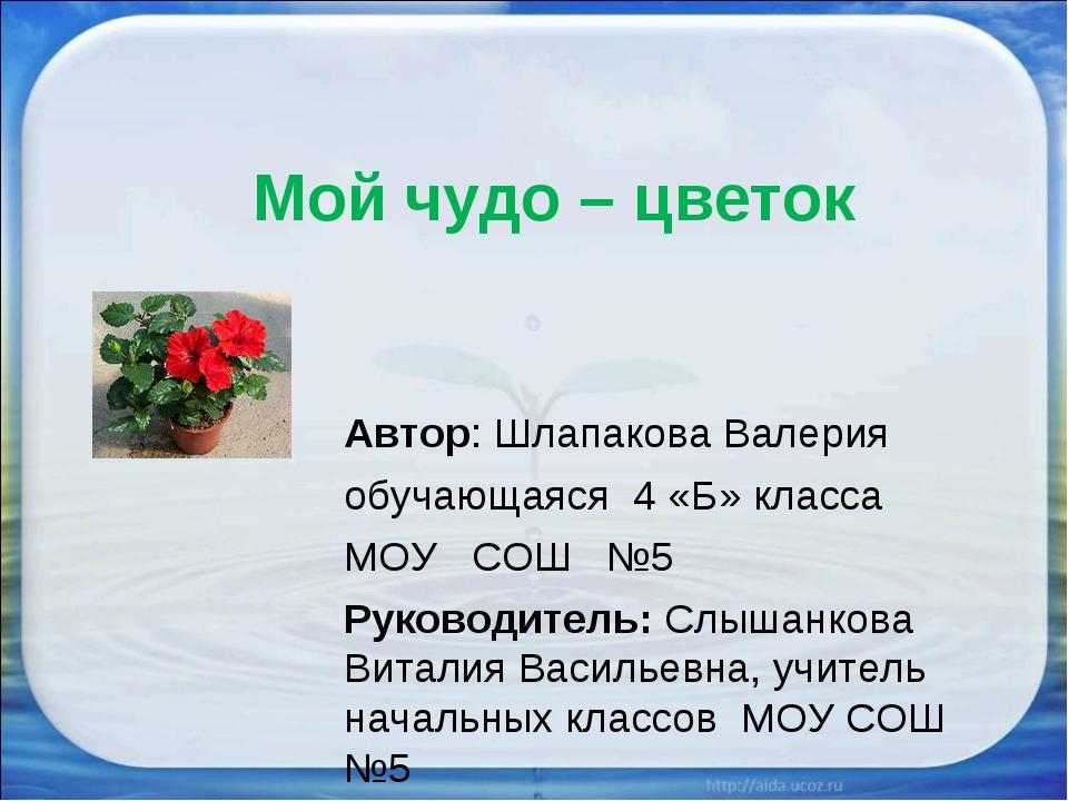 Мой чудо – цветок Автор: Шлапакова Валерия обучающаяся 4 «Б» класса МОУ СОШ №...