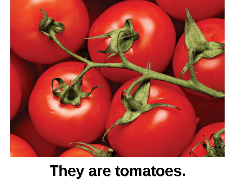 They are tomatoes.