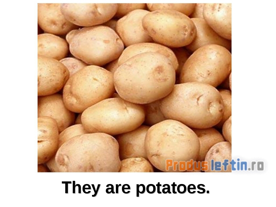 They are potatoes.