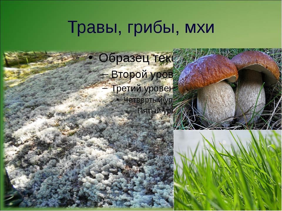 Травы, грибы, мхи