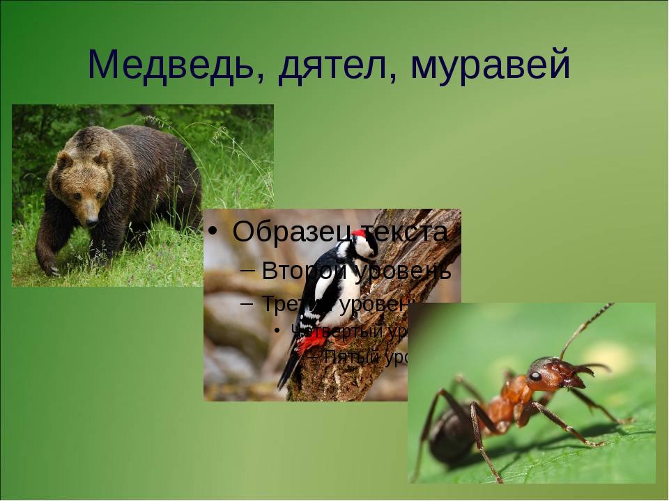 Медведь, дятел, муравей