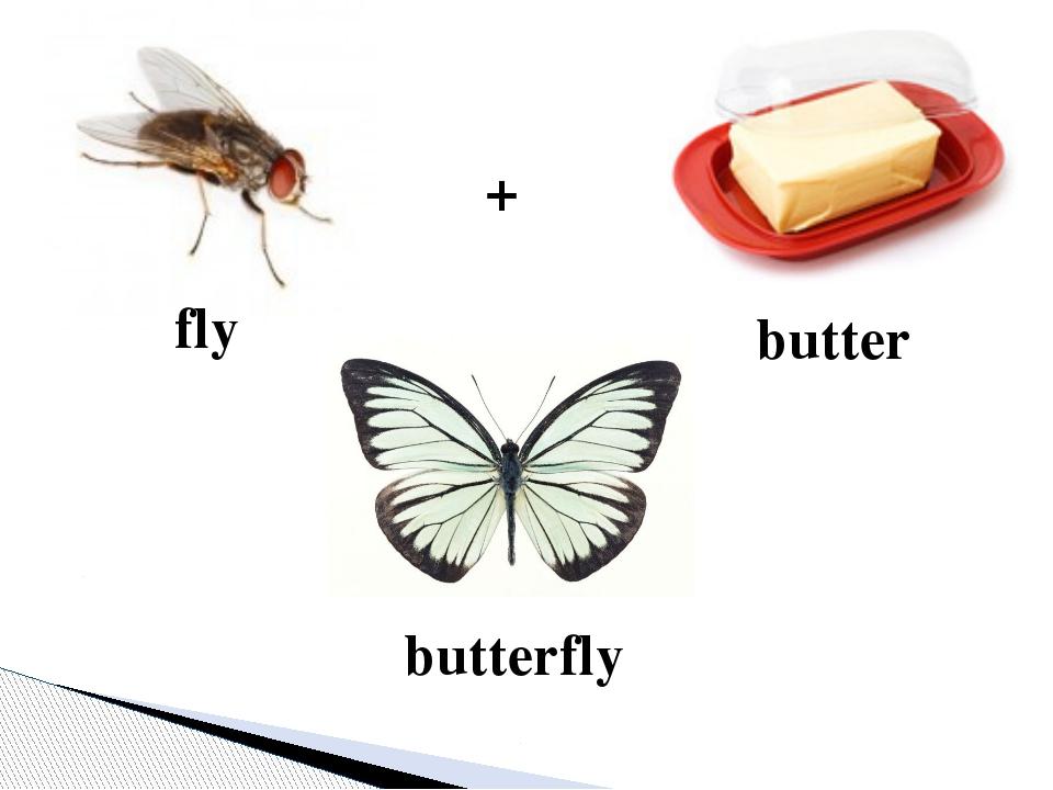 + butter fly butterfly