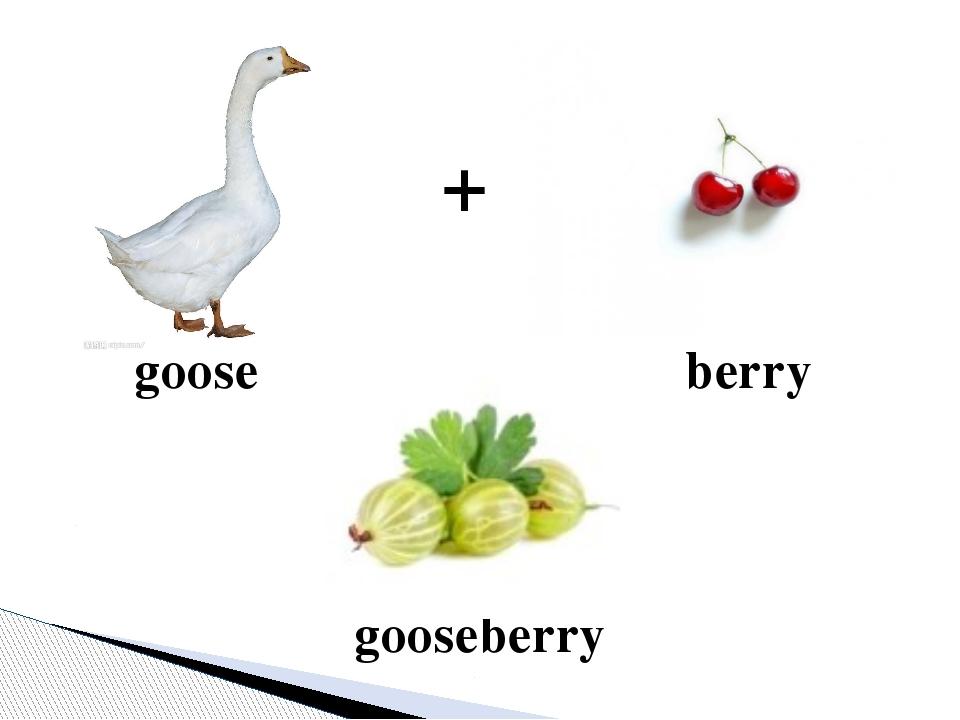 berry goose gooseberry +
