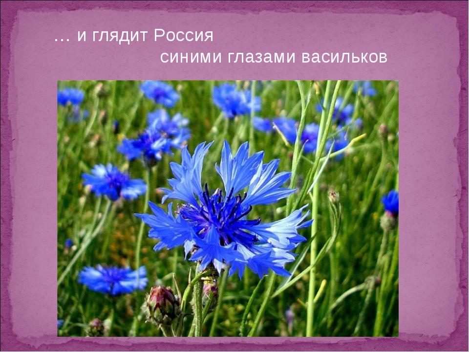 … и глядит Россия синими глазами васильков