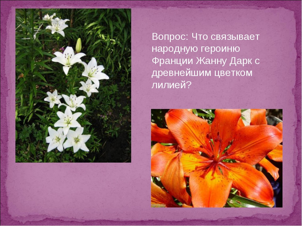 Вопрос: Что связывает народную героиню Франции Жанну Дарк с древнейшим цветко...