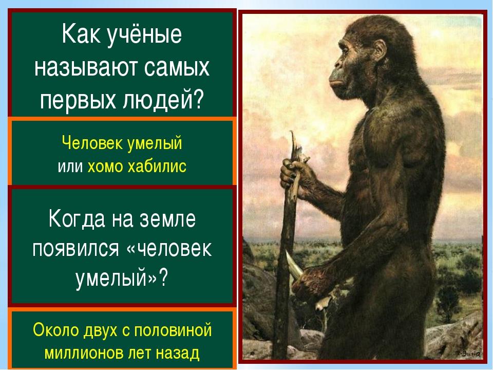 Как учёные называют самых первых людей? Человек умелый или хомо хабилис Когда...