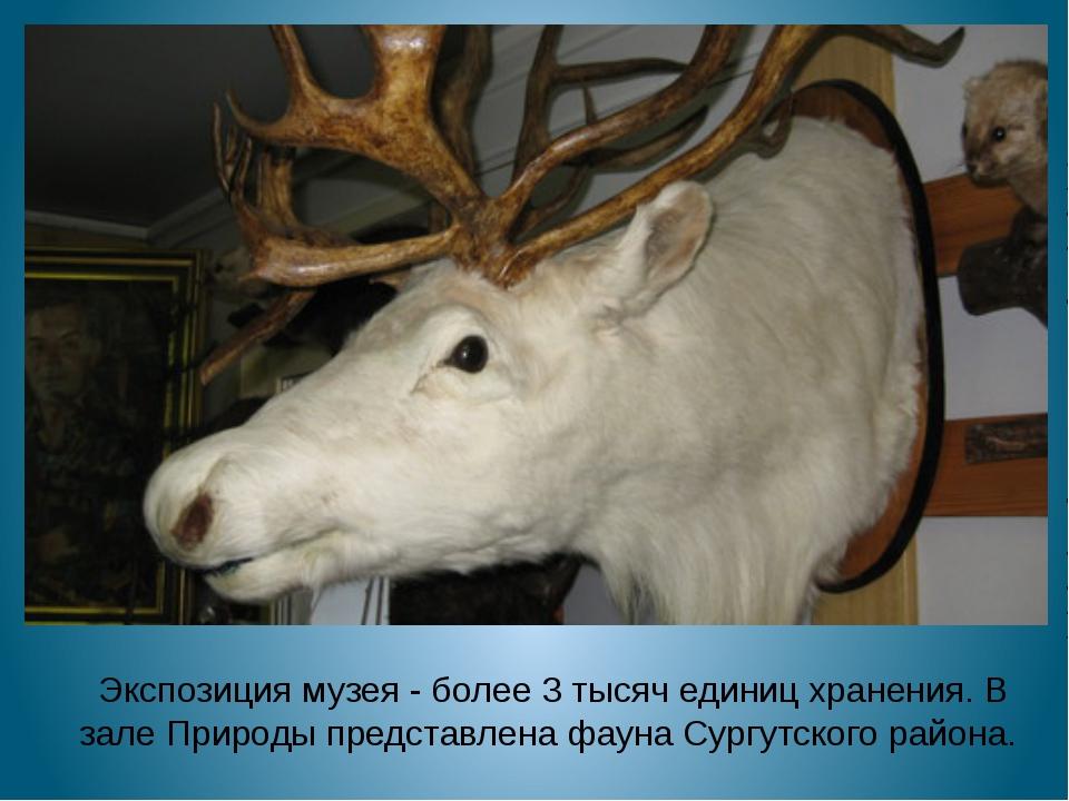 Экспозиция музея-более 3 тысяч единиц хранения. В зале Природы представлен...