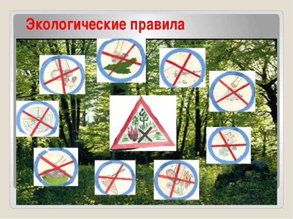 Экологические правила