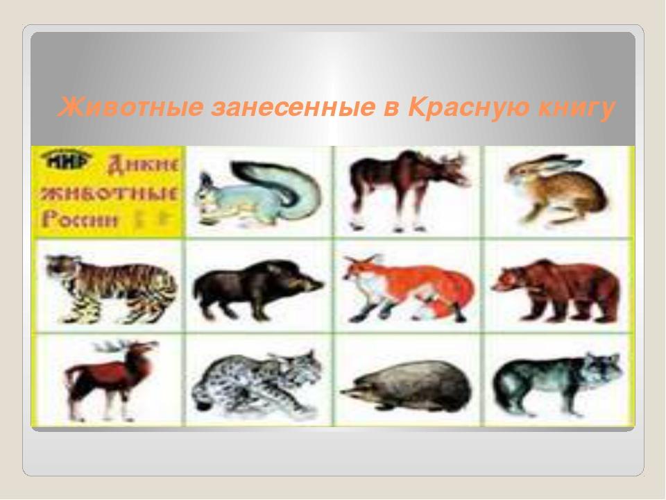 Животные занесенные в Красную книгу