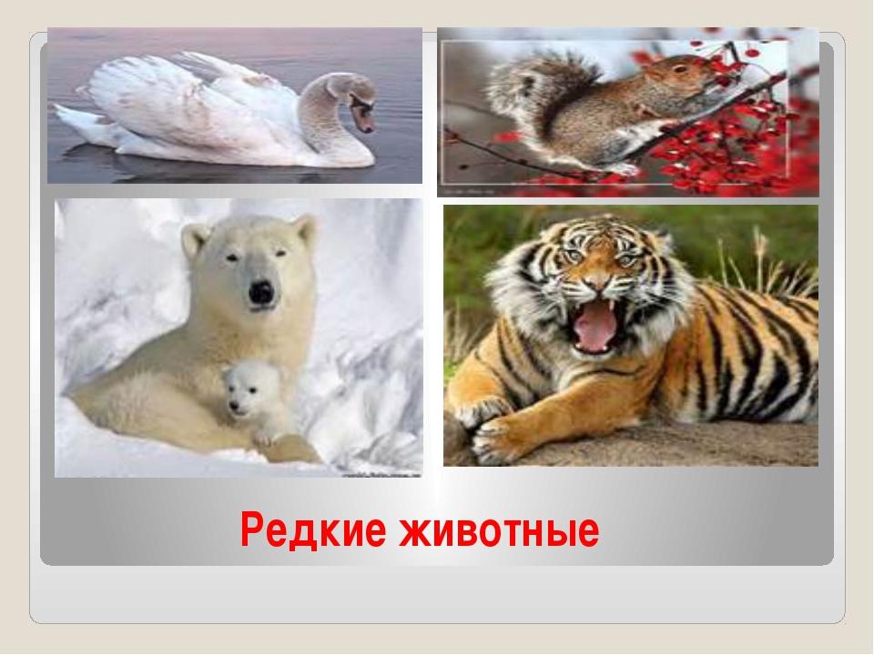 Редкие животные