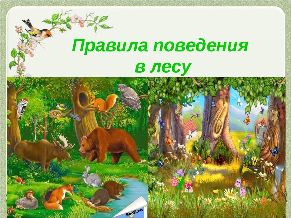 Правила поведения в лесу